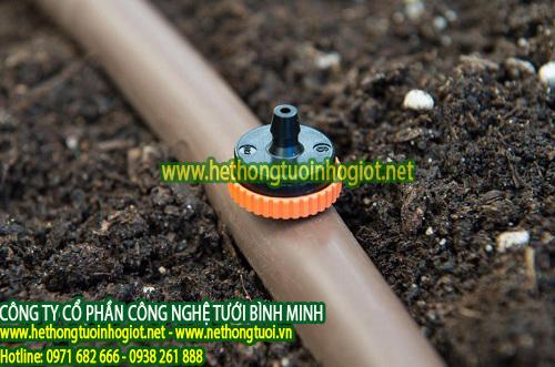 Trồng dưa lưới trong nhà kính áp dụng hệ thống tưới nhỏ giọt Israel